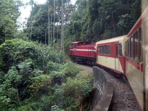 [台中旅行記] 阿里山森林鉄道に乗りに行く