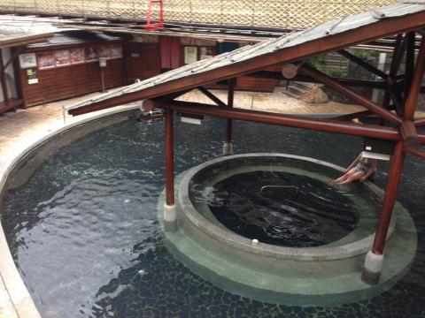 [台湾] 台中にある谷関温泉 谷関大飯店に宿泊した感想