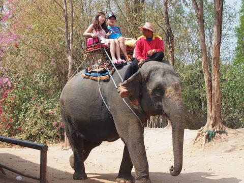 [タイ・パタヤ] エレファントビレッジで象に乗るつもりが・・・